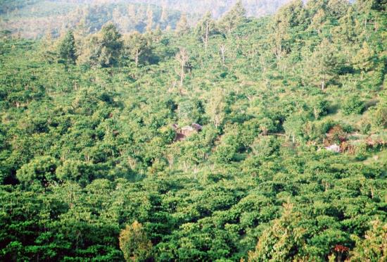 Schön grün - durch den Dschungel an die Küste