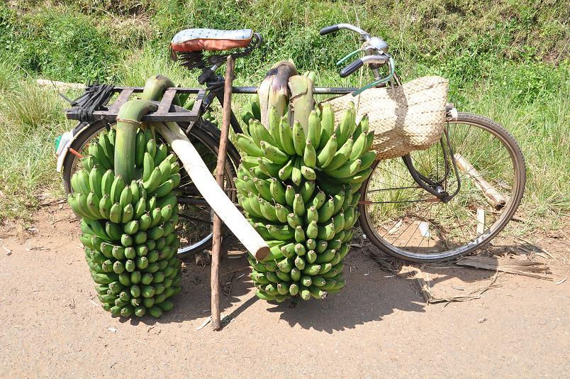 Ich bin nicht der einzige Radler auf Ugandas Strassen - und manche schleppen wesentlich mehr als ich!