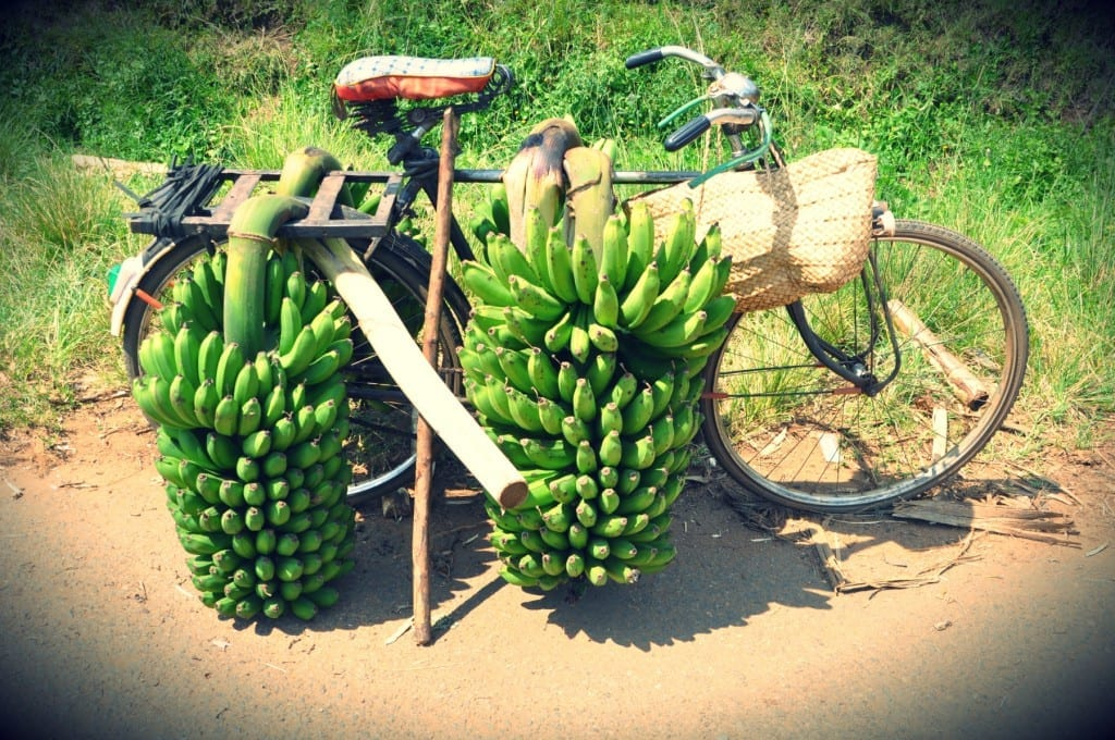 Bananen-Rad in Uganda