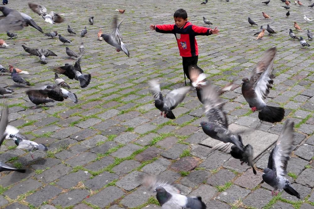 Tauben verjagen im Park...
