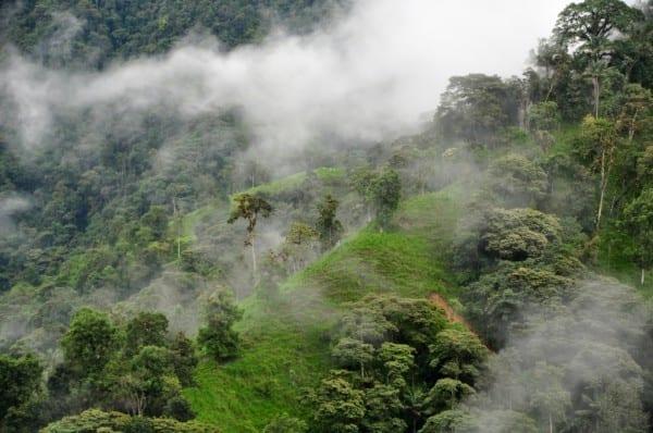 ecuador 2014 grün2