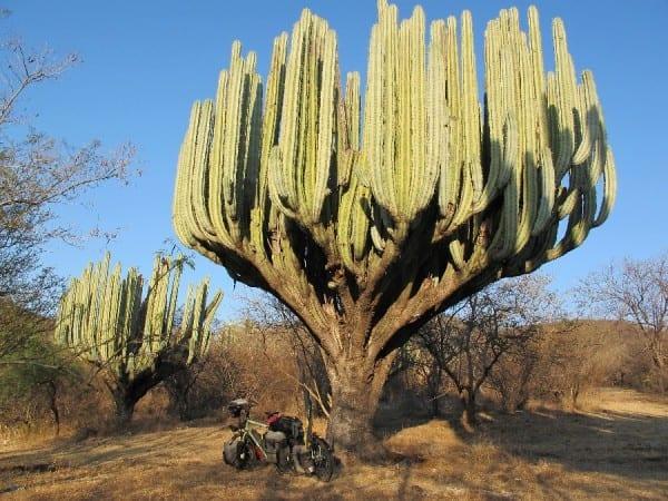 Baja California © radtraum.de