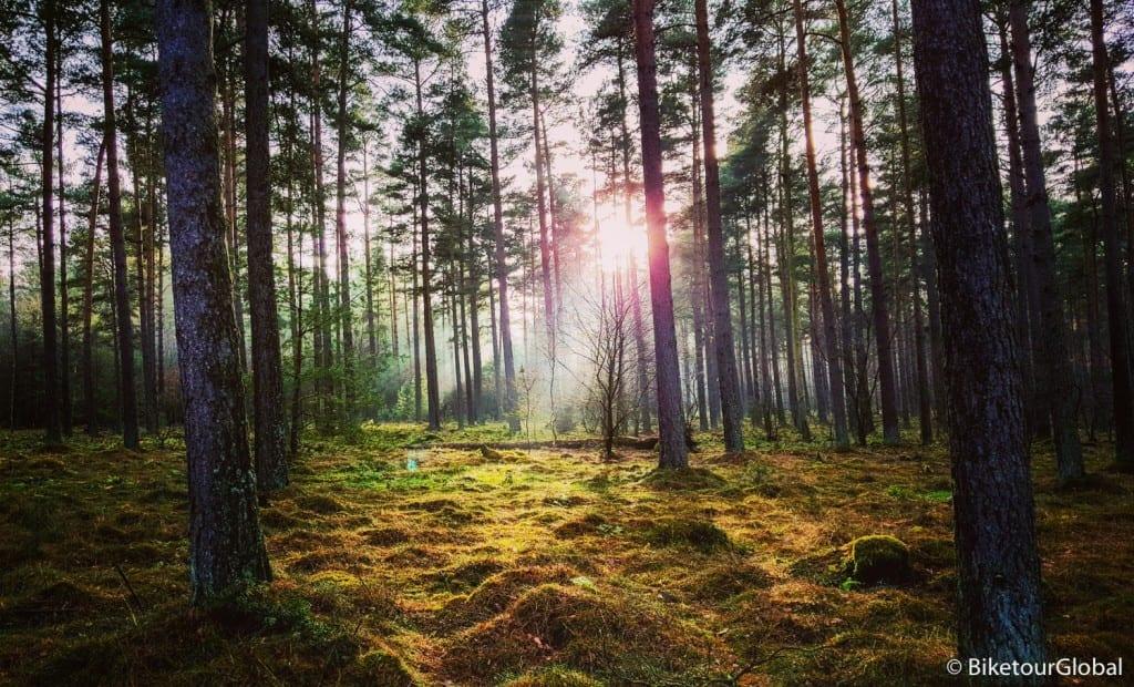 Wintersonne und Wald