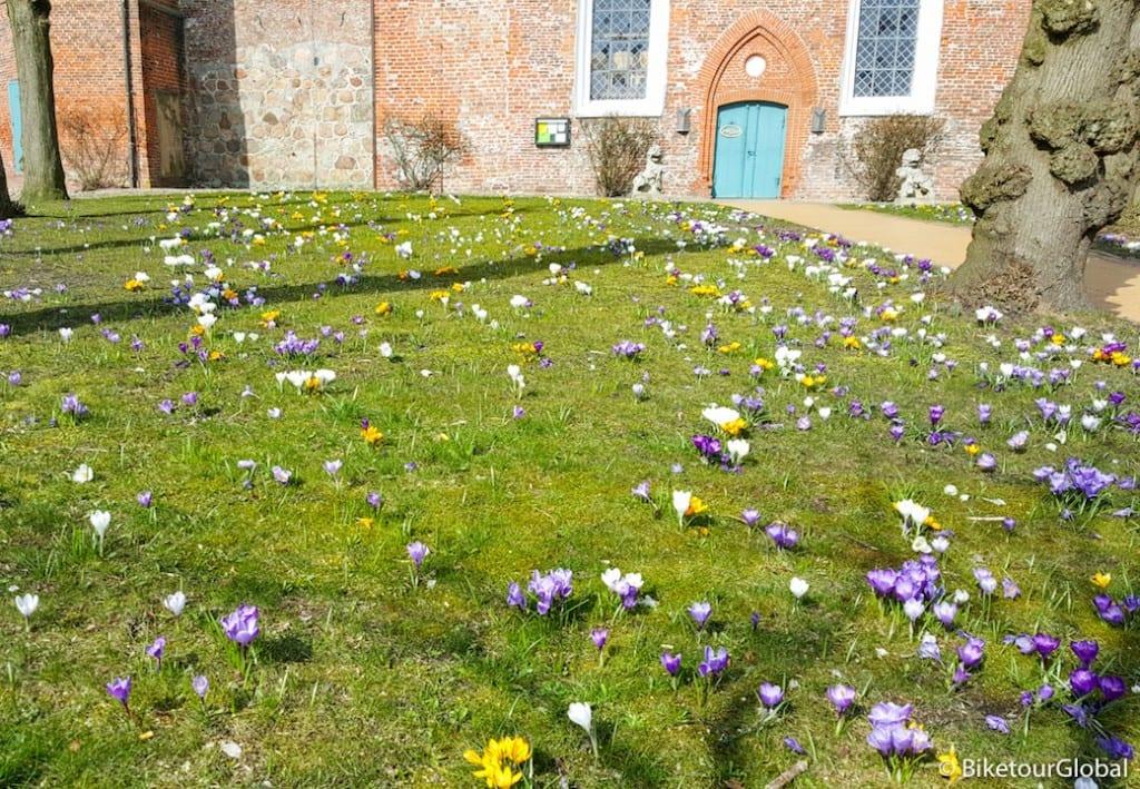 Meine Osterwiese vor der Kirche in Tönning