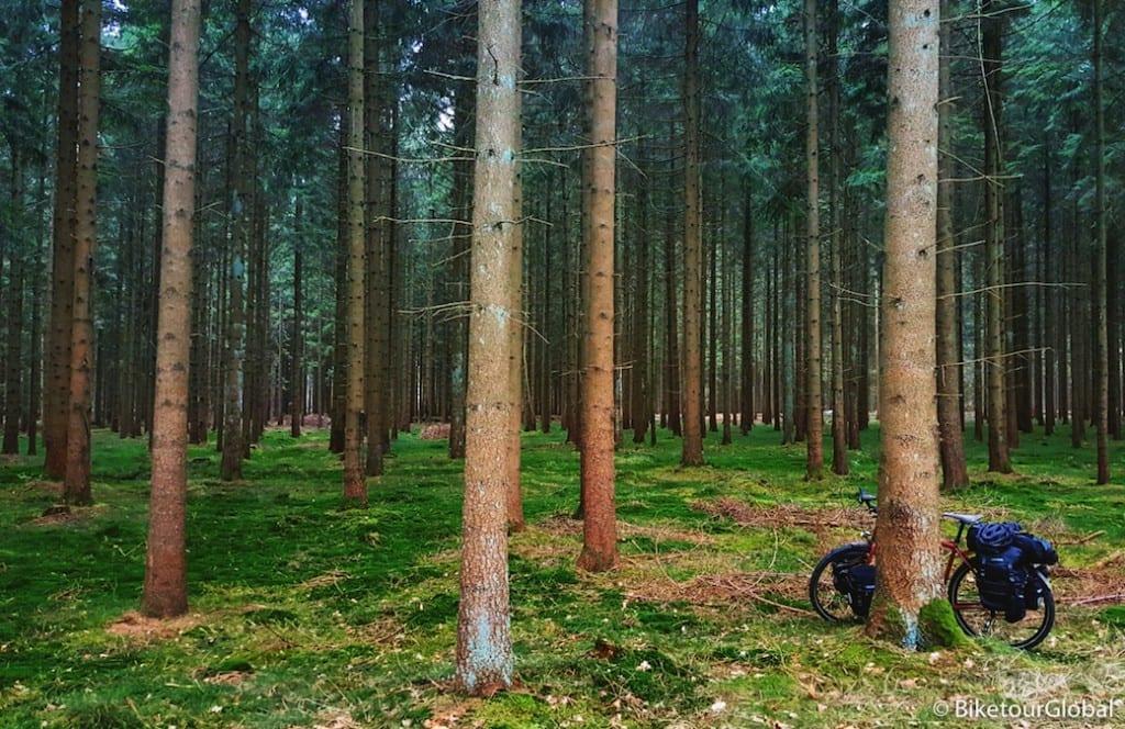 Im Wald vor dem Nord-Ostsee-Kanal