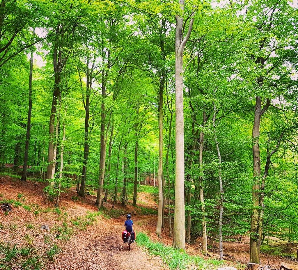 Durch den Wald...
