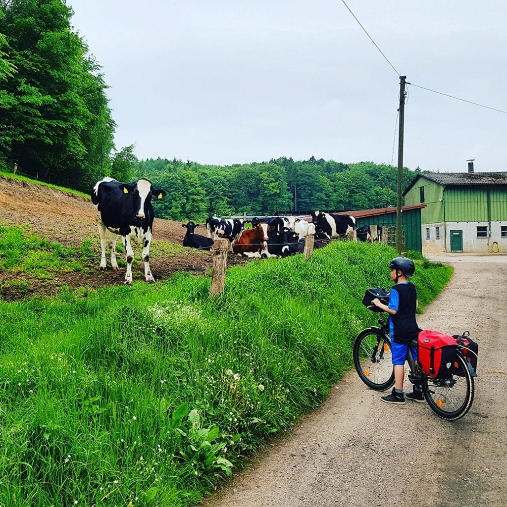 Kind und Kuh lernen sich kennen