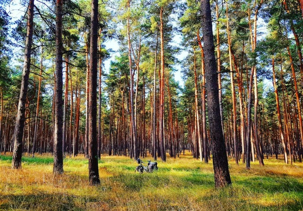 Im Wald vor Gatow